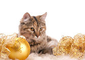 Cute cat and christmas decoration — Stock Photo