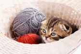 Cute kitten and knitting ravels — Stock Photo