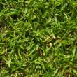 Grassy landscape — Stock Photo #19075497