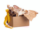 Decoration rabbit in box set — Stock Photo