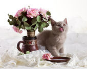 Small kitten and flowers — Stock Photo
