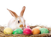 Easter bunny and colored eggs — 图库照片