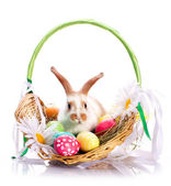 Fancy rabbit in the basket — Stock Photo