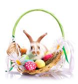 Fancy rabbit in the basket — Stock Photo