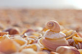 Beach with shells — Photo