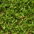 Stock Photo: Grassy landscape