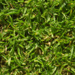 Grassy landscape — Stock Photo #21510227