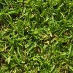 Grassy landscape — Stock Photo #21510227