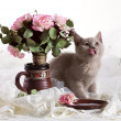 Small kitten and flowers — Stok fotoğraf