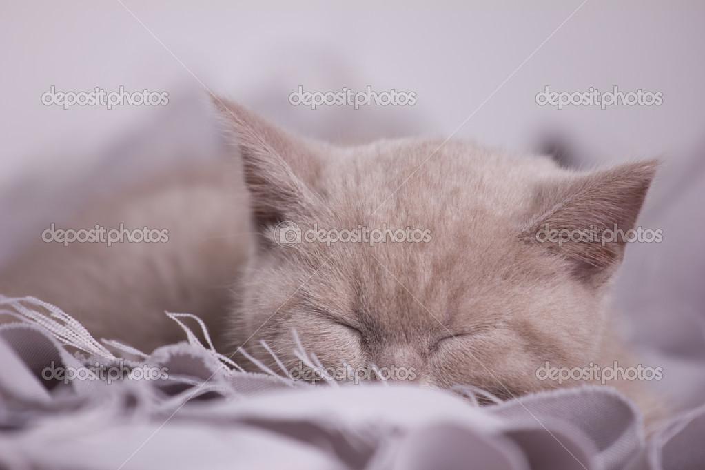 睡猫— 图库照片08zaretskaya#21510021