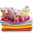 Many kitten on towels — Stock Photo