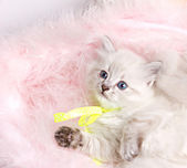 Closeup portrait of a beautiful kitten — Stock Photo