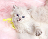Furry kitten lying on furry mat — Stock Photo