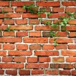 Old brick wall growing grass — Stock Photo