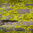 Old brick wall growing moss — Stock Photo
