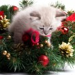 Furry kitten on xmas tree — Zdjęcie stockowe