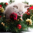 Furry kitten on xmas tree — 图库照片