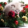 Furry kitten on xmas tree — Stock Photo #33919377