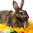 Stock Photo: Bunny and colorful eggs