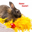 Stock Photo: Bunny and red egg