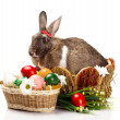 Easter still with bunny — Stock Photo