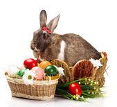 Easter still with bunny — Zdjęcie stockowe