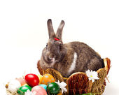 Bunny and multicolored  eggs — Stock Photo