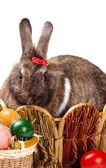 Bunny and colorful  eggs — Zdjęcie stockowe