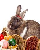 Królik bugs i wielkanoc jaja — Zdjęcie stockowe