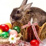 Easter rabbit — Stock Photo #41130823