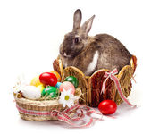 Bunny and colorful  eggs — Stock Photo