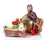 Bunny and easterl  eggs — Stock Photo