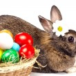 Easter rabbit, eggs and camomile — Stock Photo
