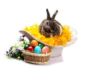 Easter bunny eggs and flowers — Stock Photo