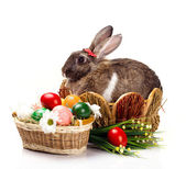Easter rabbit  eggs and flowers — Stock Photo