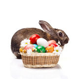 colorful eggs and  rabbit — Stock Photo