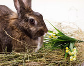 Rabbit and flowers — Stock Photo