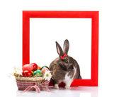 Pasen konijn in rood kader — Stockfoto