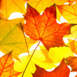 Pattern from  maple leaves — Stock Photo #50386365