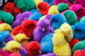 Цветной цыпленок — Стоковое фото