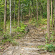 Pathway in the forest — Stock Photo