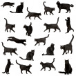 Black cat — Stock Photo #10872224
