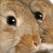 Royalty-Free Stock Photo: Close-up of two rabbits heads