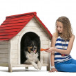 Young girl sitting and giving a toy to a Border Collie insides kennel against white background - Stock Photo