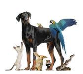Skupina domácích zvířat — Stock fotografie