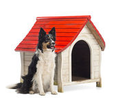 Border Collie sitting next to a kennel and looking away against white background — Stock Photo