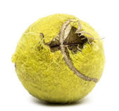 Chewed tennis ball against white background — Stock Photo