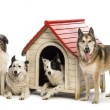 Group of dogs in and surrounding a kennel against white background — Stock Photo #21416165
