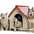 Group of dogs in and surrounding a kennel against white background — Stock Photo #21416185