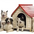 Group of dogs in and surrounding a kennel against white background — Stock Photo #21416265